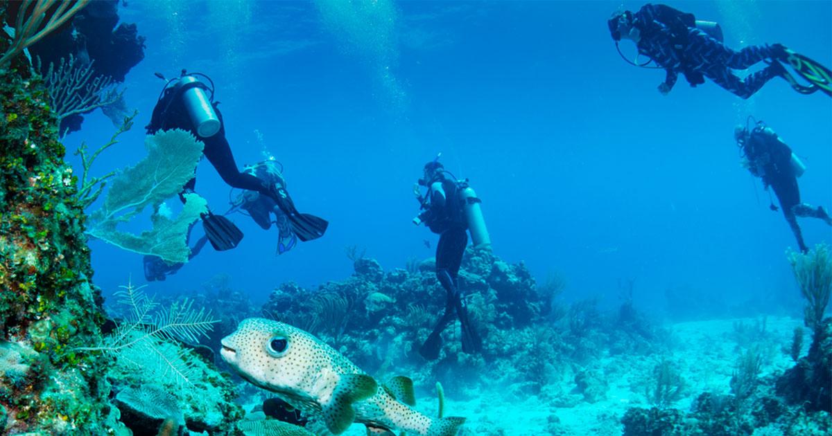 Aprender a mergulhar: o que você precisa saber para mergulhar no fundo do mar
