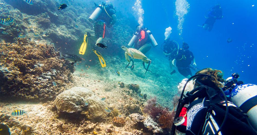 Mergulho autônomo é diferente do mergulho livre por causa do equipamento SCUBA