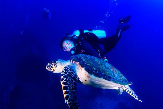 Recife é um dos melhores lugares para mergulhar no Brasil