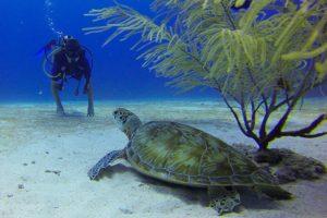 O mergulho te ajuda a ter contato com a natureza
