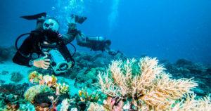 Conheça os melhores filmes de mergulho