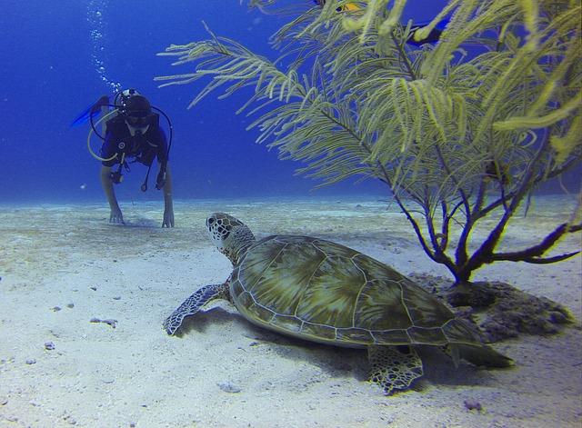 Mergulho em contato com a natureza