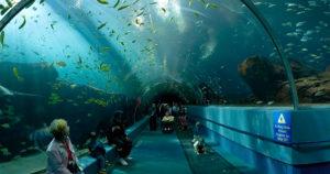 Conheça os oceanários mais famosos do mundo