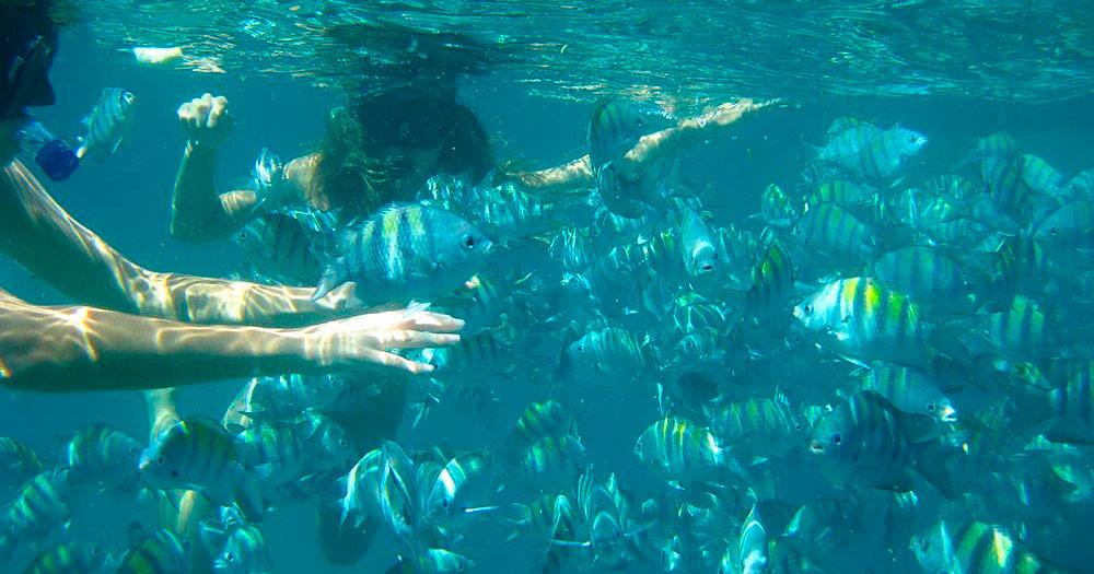 Ilha Comprida é um dos principais pontos de mergulho em Paraty