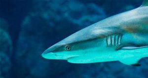 Mergulho e tubarões, tire suas dúvidas