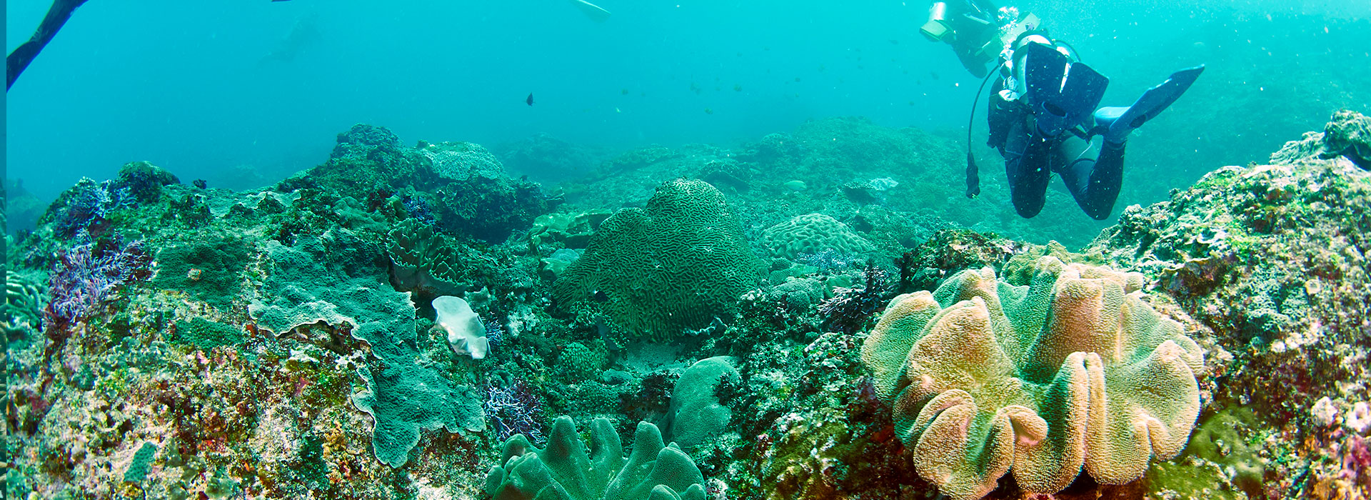 Mergulho em Ilha Grande - Angra dos Reis