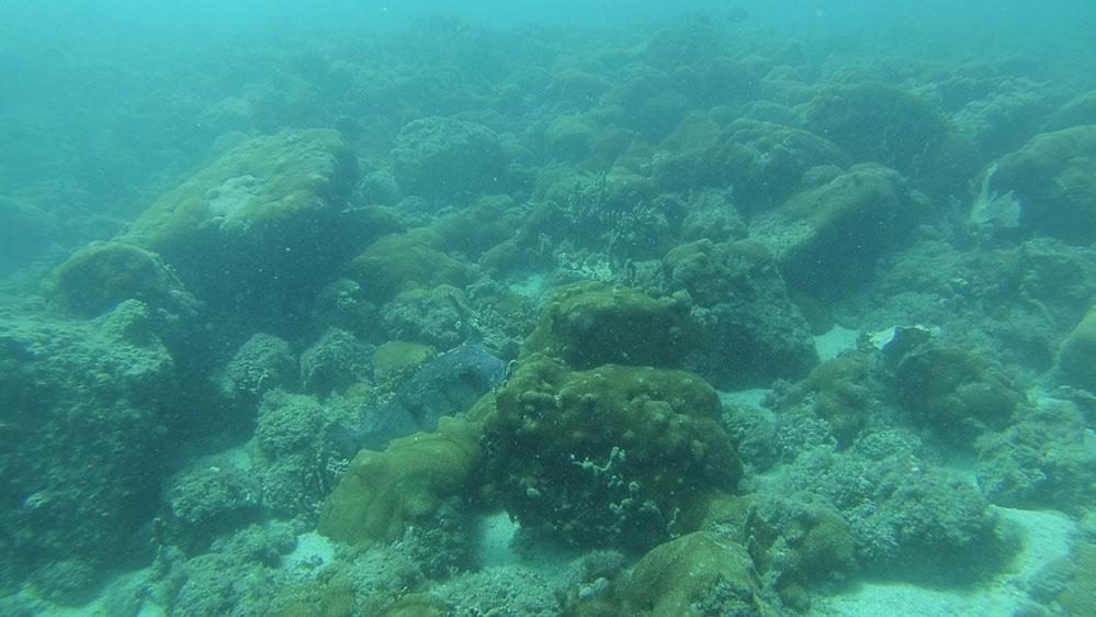 Mergulhe em Arraial do Cabo