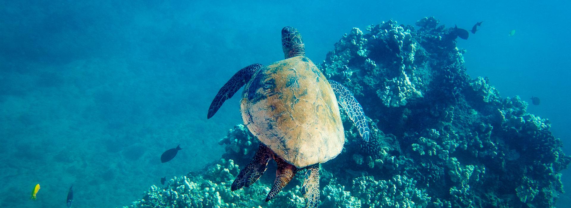 Venha fazer mergulho em Arraial do Cabo