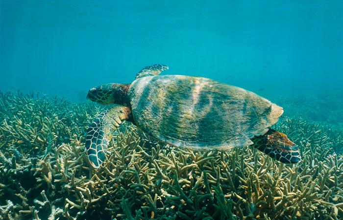 Foto de mergulho em Ilha Grande, Angra dos Reis