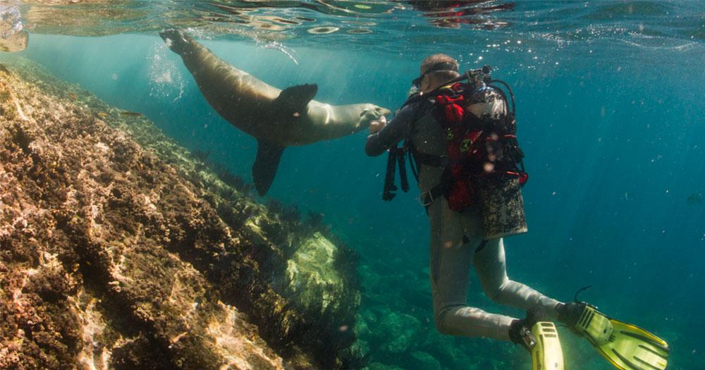 Mergulhar em Galápagos com leões marinhos
