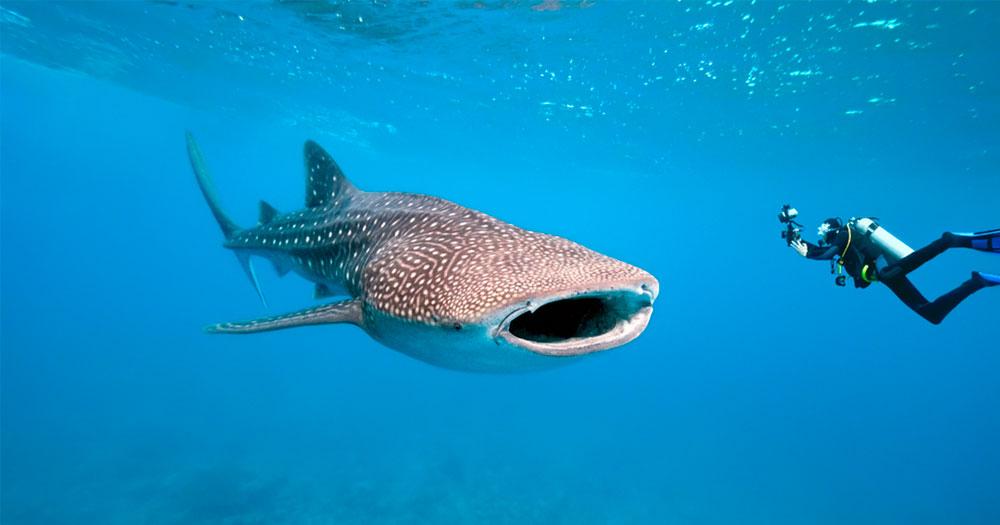 Mergulhar em Galápagos com tubarões