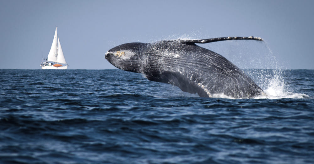 Abrolho é um bom lugar para ver baleias no Brasil