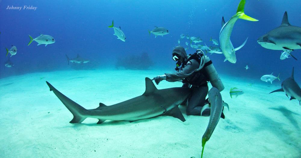 Cristina Zenato é uma mergulhadora que vale a pena seguir nas redes sociais