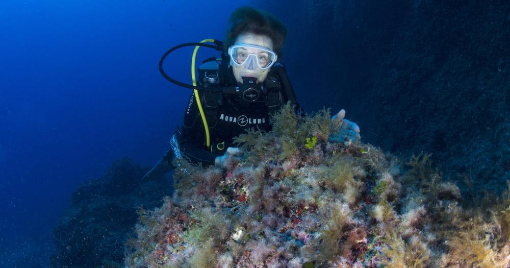 Sylvia Earle é uma das mergulhadoras mais importantes do mundo.