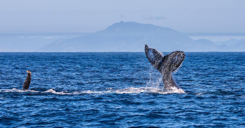 Vitória, no Espírito Santo, é um bom lugar pra ver baleias