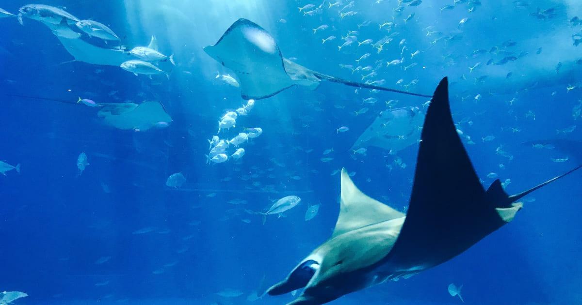 Conheça os principais animais marinhos que podem ser vistos por quem mergulha