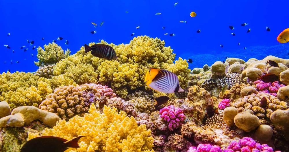 O Mar Vermelho possui uma das maiores barreiras de corais do planeta