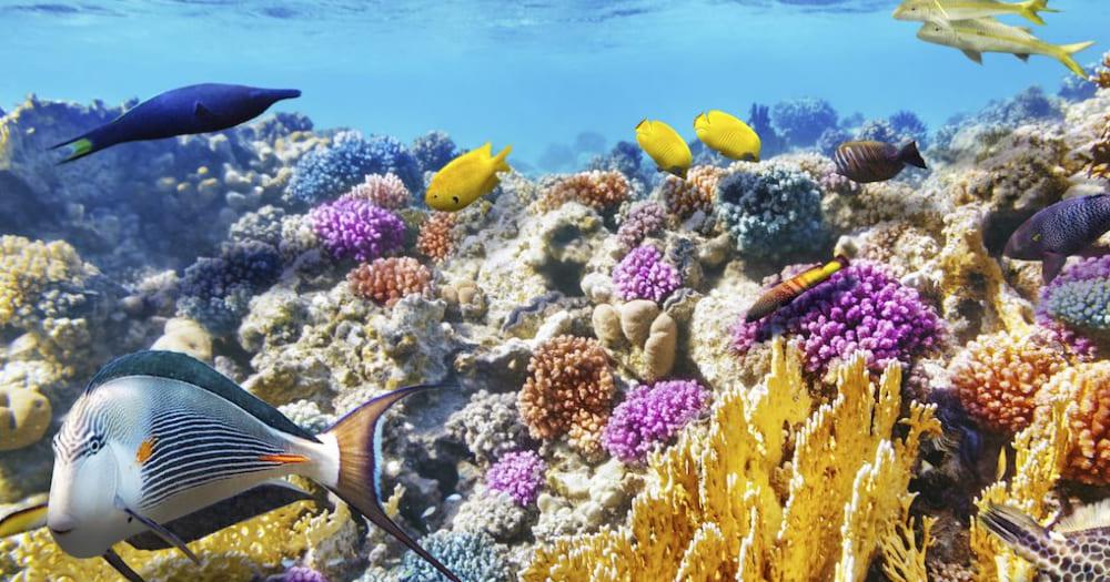 Recife Mesoamericano é uma das maiores barreiras de corais do mundo