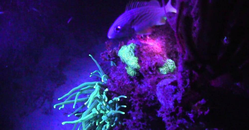O mar é mais colorido no mergulho noturno