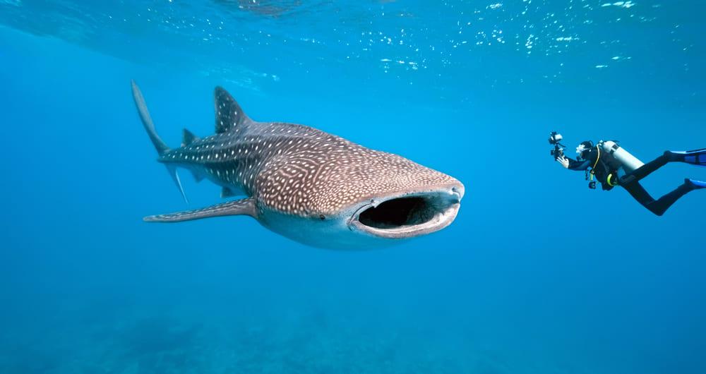 Galápagos é um dos principais destinos de mergulho da América Latina