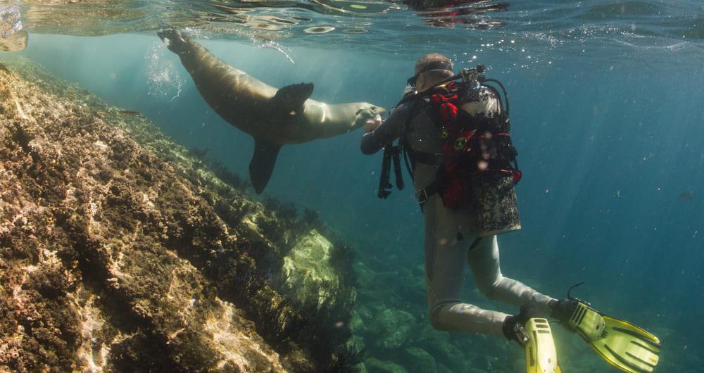 Valdes é um dos principais destinos de mergulho da América do Sul
